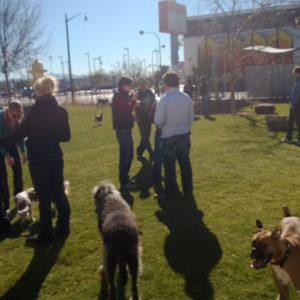 Basking in sunshine and the warmth of an amazing dog community.