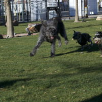 Seven Tips for Choosing the Right Daycare/Boarding Spot for Spot