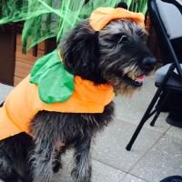 Pumpkin costume? Yes. Pumpkin pie at Thanksgiving? NO!