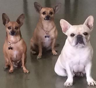 Dog Training Las Vegas